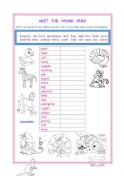 English Worksheet: MEET THE YOUNG ONES