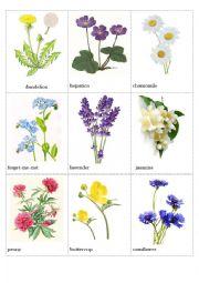 English Worksheet: Flowers pictionary