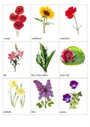 English Worksheet: Flowers pictionary (part 2)