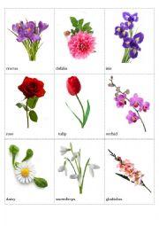 English Worksheet: Flowers pictionary (part 3)