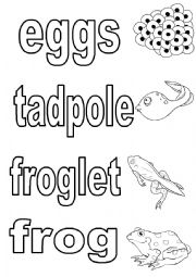 English Worksheet: Life cycle of butterfly and frog