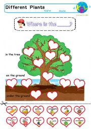 English Worksheet: Where does the plant grow