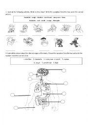 Internal Organs and Illnesses