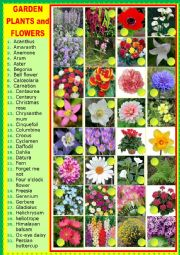 English Worksheet: Garden plants and flowers