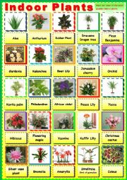 English Worksheet: The most famous indoor plants. Pictionary