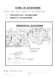 English Worksheet: types of ecosystems and food chains