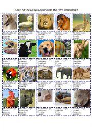 English Worksheet: ANIMAL DESCRIPTION BODY PARTS MULTIPLE CHOICE