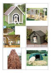 English Worksheet: Animal House Flash Cards 1
