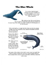 English Worksheet: The Blue Whale