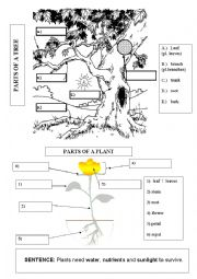 English Worksheet: PARTS OF PLANTS & TREES 1