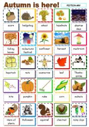 English Worksheet: Autumn is here