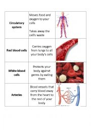 English Worksheet: Human Body Systems Flashcards