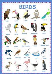 English Worksheet: Birds pictionary