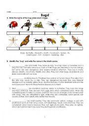 English Worksheet: Bugs! Reading