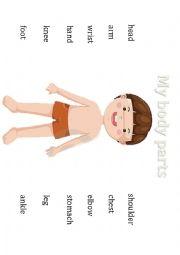 English Worksheet: My Body parts