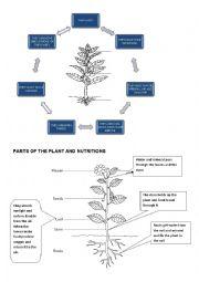 English Worksheet: the plans