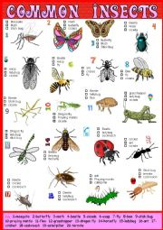 English Worksheet: Common Insects Pictionary and Multiple choice + Key