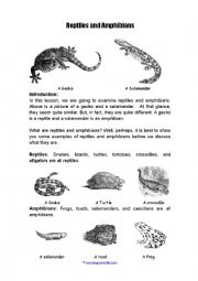 English Worksheet: Amiphians and reptiles