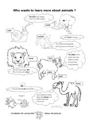 English Worksheet: To learn more about animals