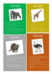English Worksheet: Animal facts - Gorilla, Giraffe, Raccoon, Ostrich (2/2)