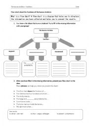 English Worksheet: Flow Chart of the functions of a human Skeleton