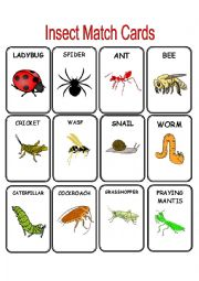 English Worksheet: Insect Match Cards