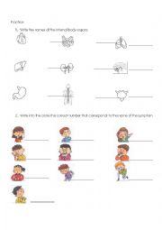 English Worksheet: Internal Organs and symptoms