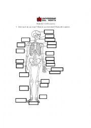English Worksheet: Skeleton
