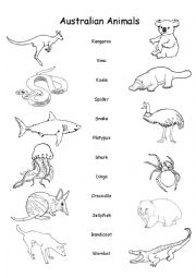 English Worksheet: Australian Animals