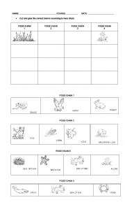 English Worksheet: THE FOOD CHAIN
