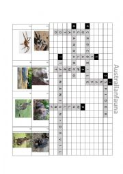 English Worksheet: Australian Fauna