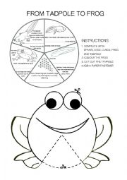 English Worksheet: Frog life cycle