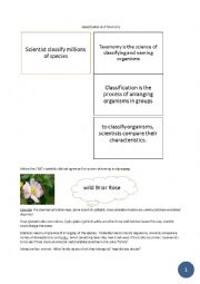 English Worksheet: CLIL scienze - Taxonomy and classification