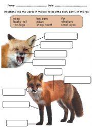 English Worksheet: Fox Animal Body Parts