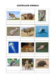 English Worksheet: Australian animals + solution