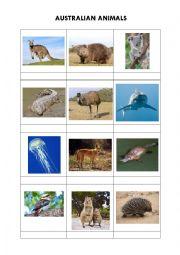 Australian animals + solution