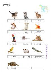 English Worksheet: Pets Pictionary