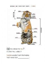 English Worksheet: ANIMAL BODY PARTS: TIGERS