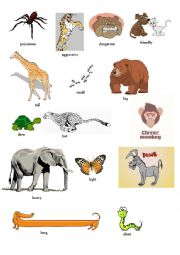 English worksheet: animals and  adjectives