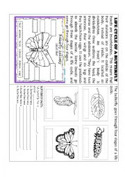 English Worksheet: THE BUTTERFLY�S LIFE CYCLE