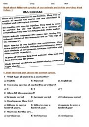 English Worksheet: Sea animals activities.