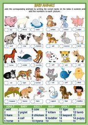 English Worksheet: BABY ANIMALS NAMES