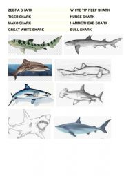 Shark Types