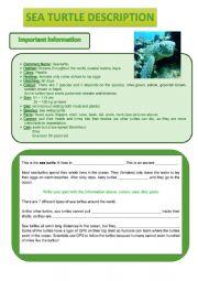 Sea turtle description