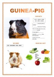 English Worksheet: PETS (guinea-pig, dog, rabbit, cat)