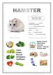 English Worksheet: PETS 2 (hamster, fish, turtle, parakeet)
