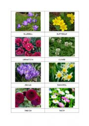 FLOWERS flashcards (part 1)