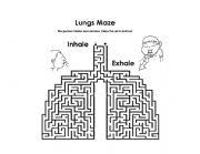 English Worksheet: Digestive and Respiratory System maze