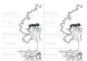 English Worksheet: Parts of A tree craft