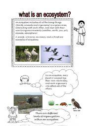 English Worksheet: ECOSYSTEM